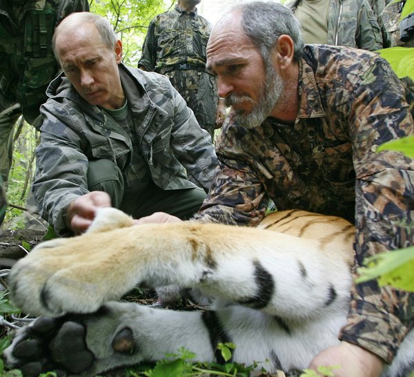 Vladimir Putin, with help from the scientist Vyacheslav Razhanov, fixing a satellite transmitter on a tiger in the Russian Far East in 2008. ALEXEY DRUZHININ / AGENCE FRANCE-PRESSE — GETTY IMAGES