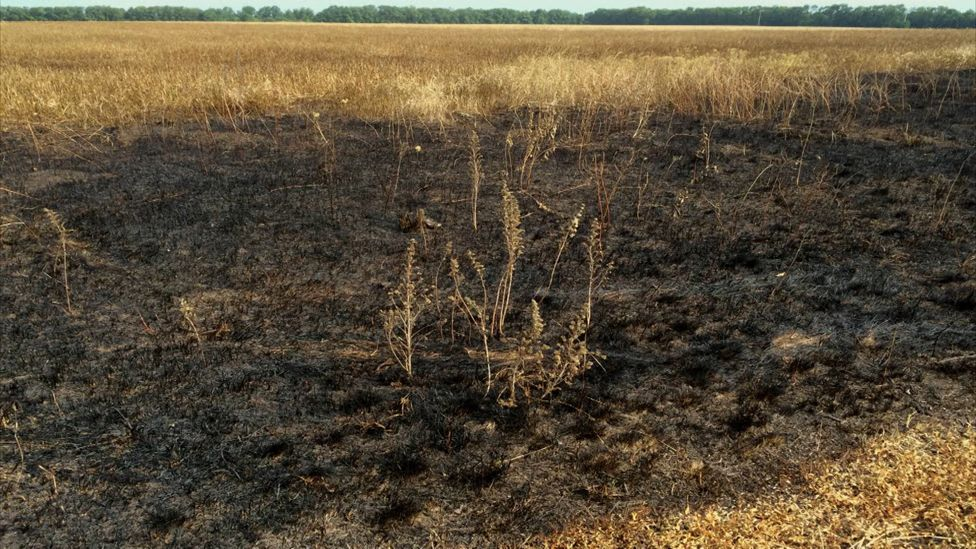 Burn mark in field where it is thought the Buk missile was launched. By Christopher Miller, Mashable