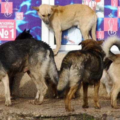 Fake: Kyiv to Cull Stray Dogs for Eurovision Song Contest