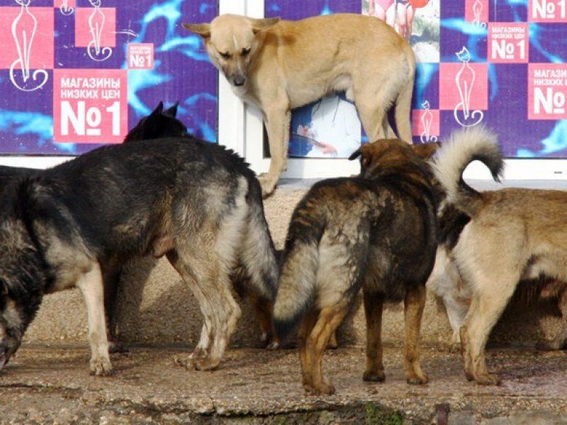Fake: Für Kiewer Eurovision werden auf Anweisung massenhaft Straßenhunde getötet