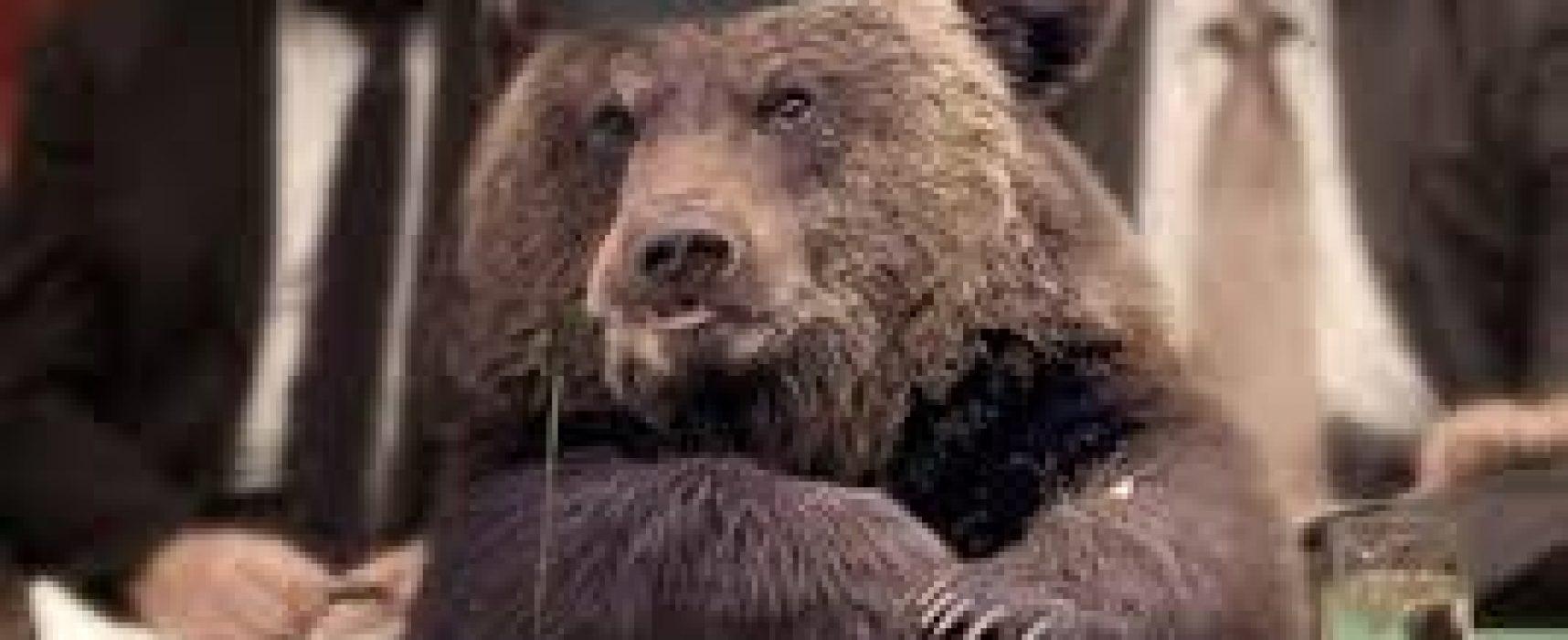 Игорь Яковенко: Воронья слободка и ее нравы