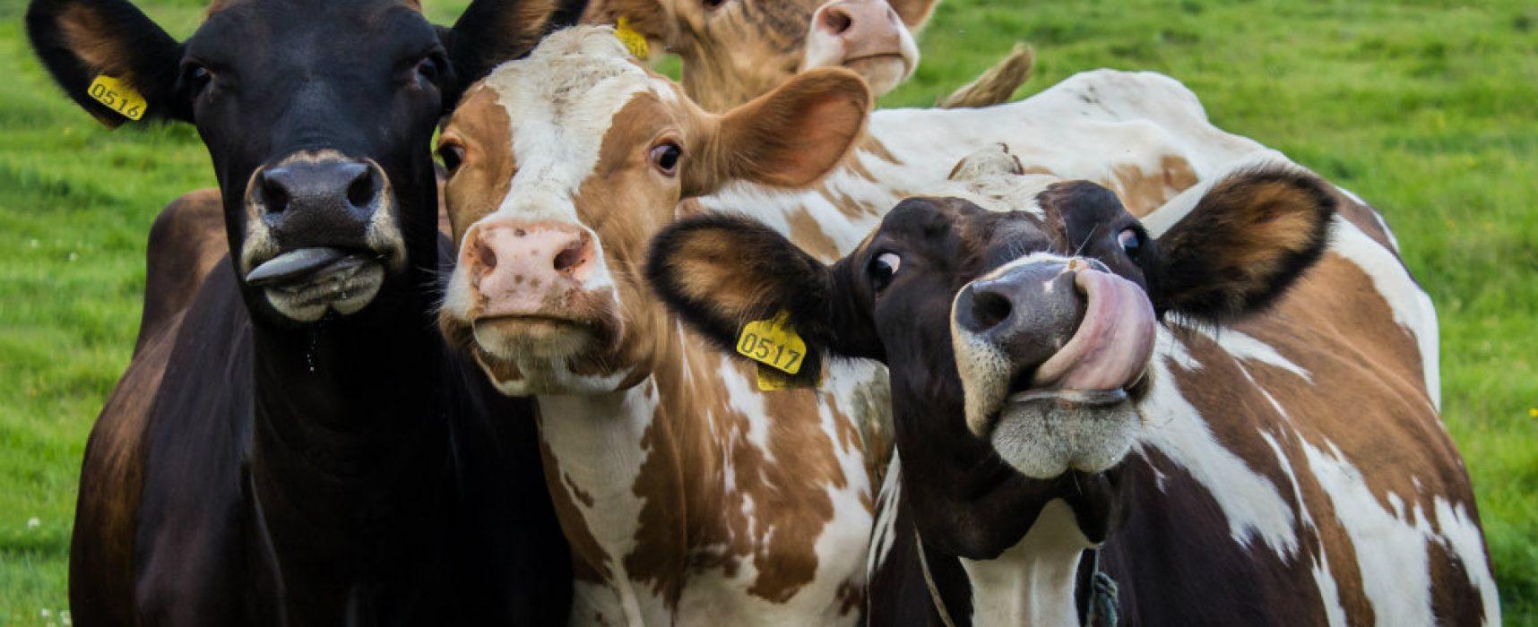 Фейк РИА «Новости»: Грета Тунберг объявляет войну белым мужчинам, а американские демократы собираются истребить всех коров