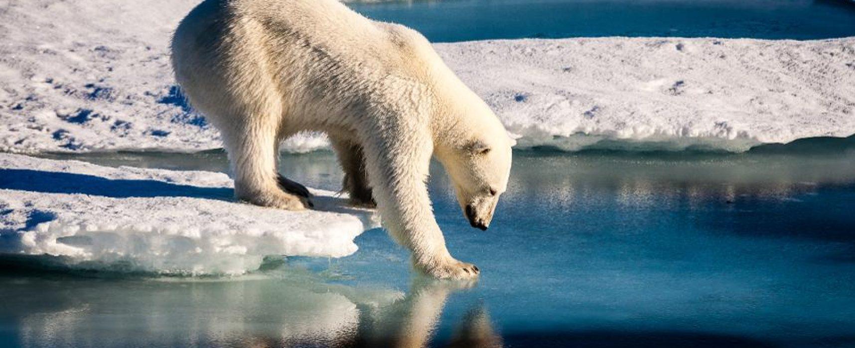 Грета vs Латынина. 4 мифа о климате, которые придумали люди, чтобы себя успокоить