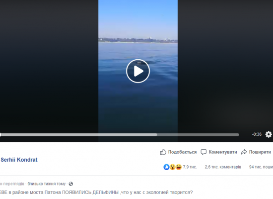 Falso: Delfines aparecieron en el río Dnipró en Kyiv