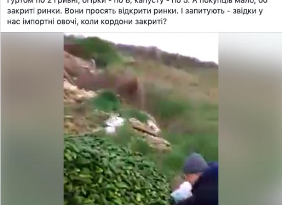 Фейк: Украинские фермеры выкидывают урожай из-за коронавируса