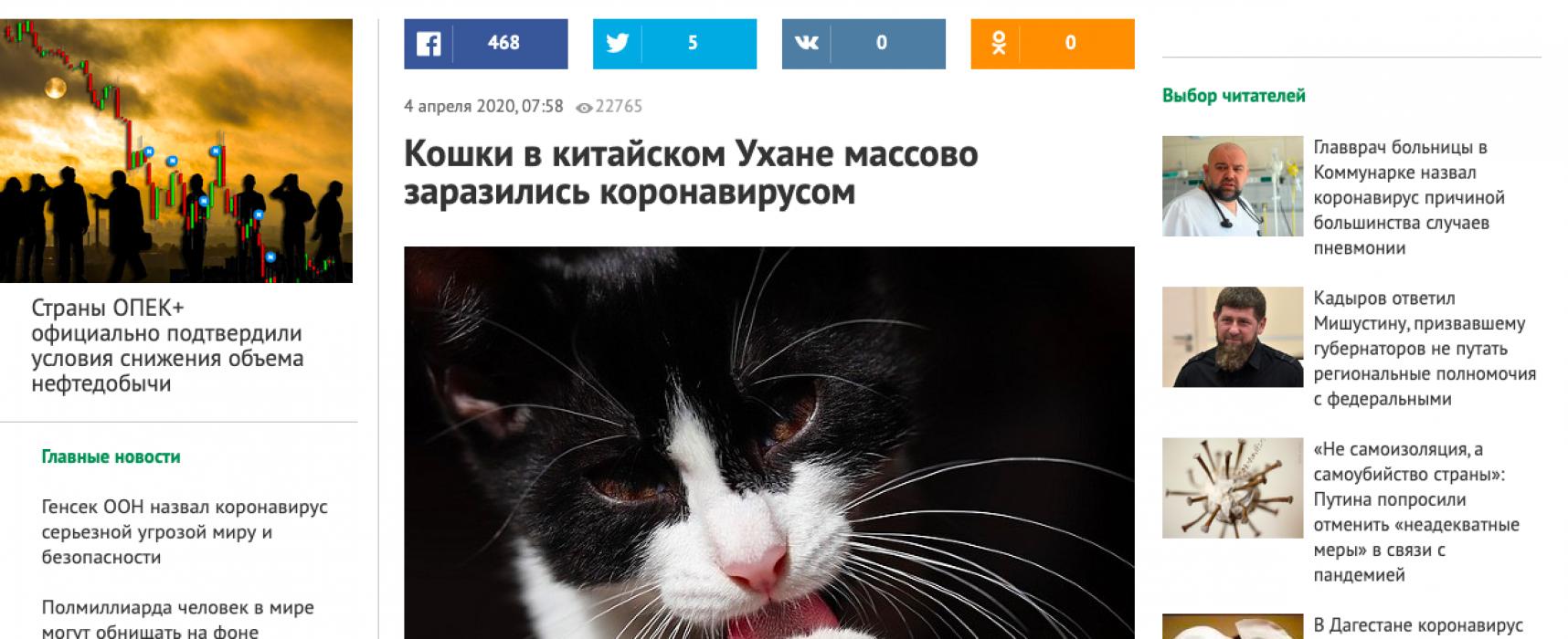 Fake: Katzen sind Träger des Coronavirus und können Menschen infizieren.