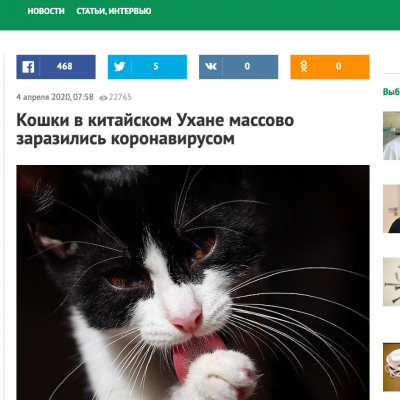 Фейк: Кошки переносят коронавирус и могут заразить человека