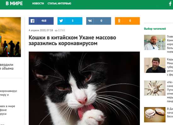 Fake: Cats Carry Coronavirus and Can Infect Humans